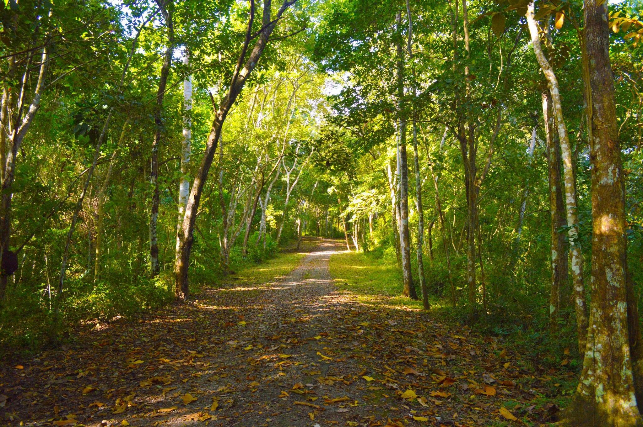 Metropolitan National Park, Mini Jungle in Panama City