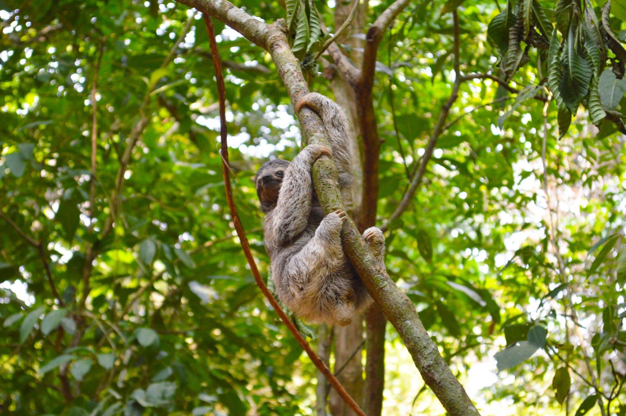 Manuel Antonio National Park – Costa Rica