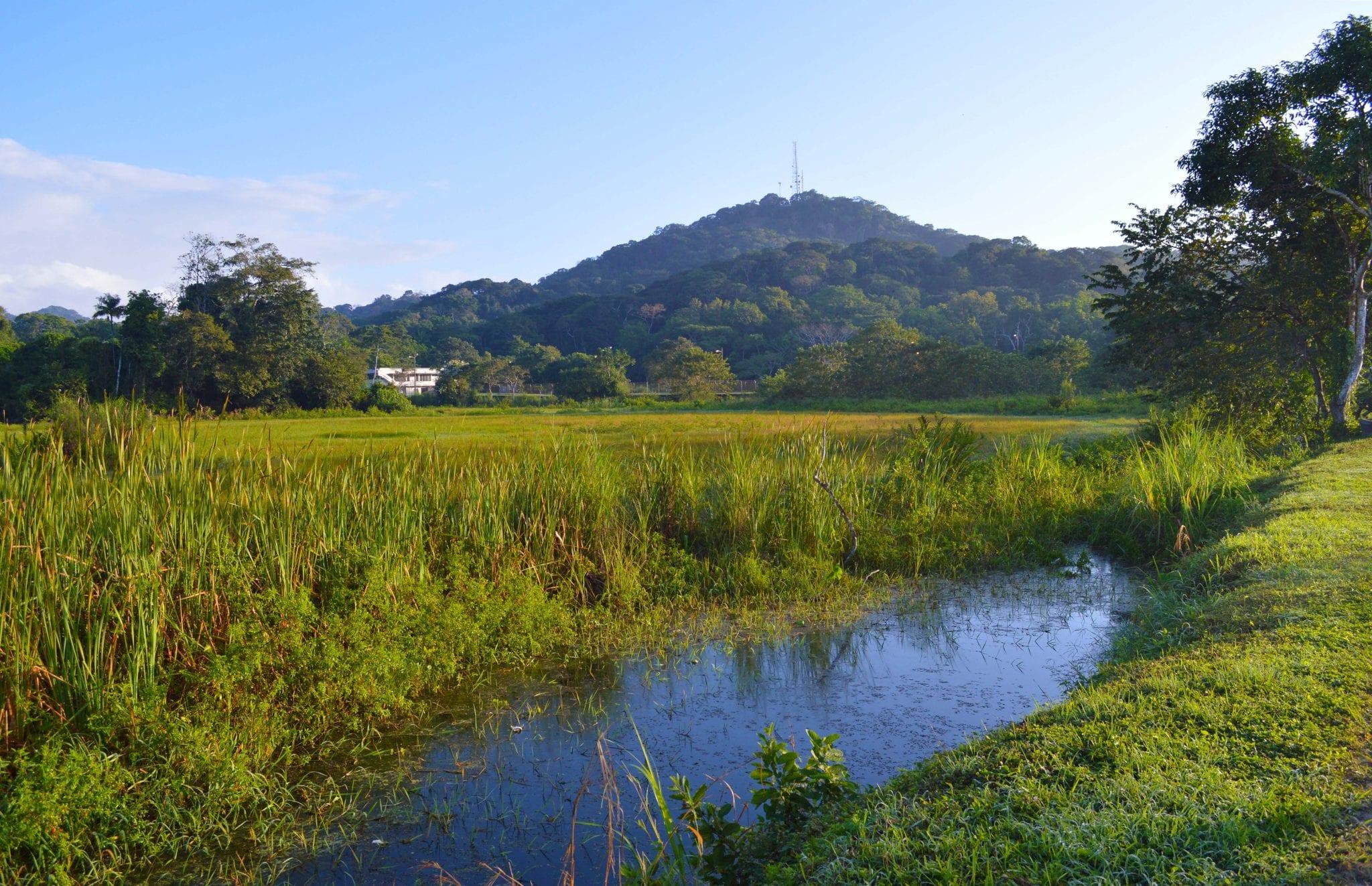 Soberania National Park, Wildlife vlakbij Panama City