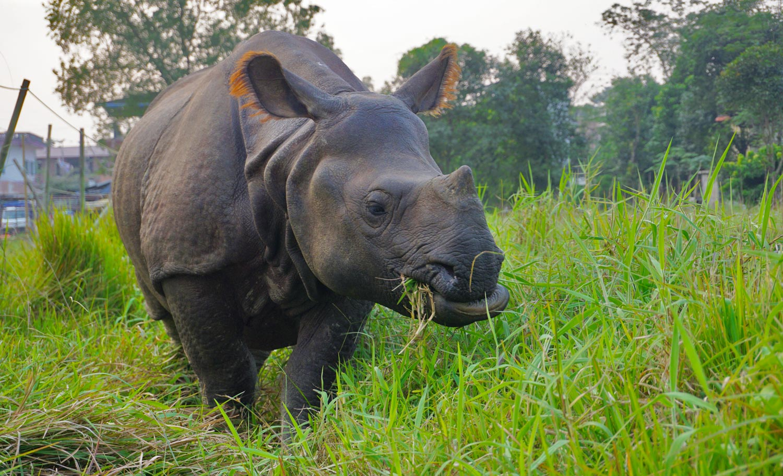 Chitwan National Park – neushoorns spotten in Nepal