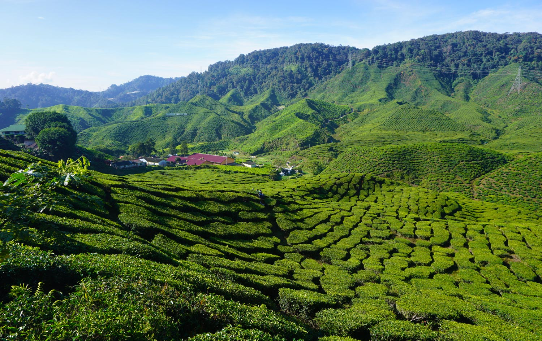 Reisroute Maleisië – Complete route voor 2-3 weken